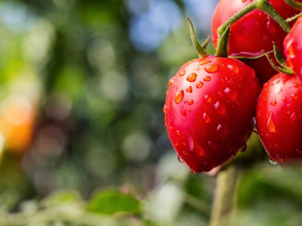 Удобрения положительно влияют на урожайность растений