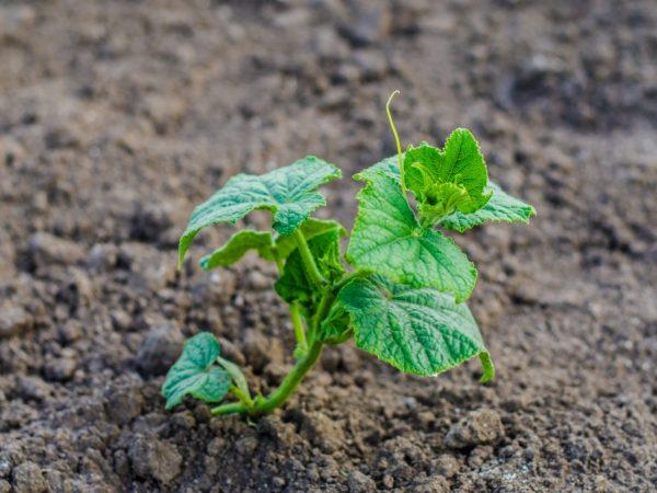 Удобрять растения необходимо регулярно