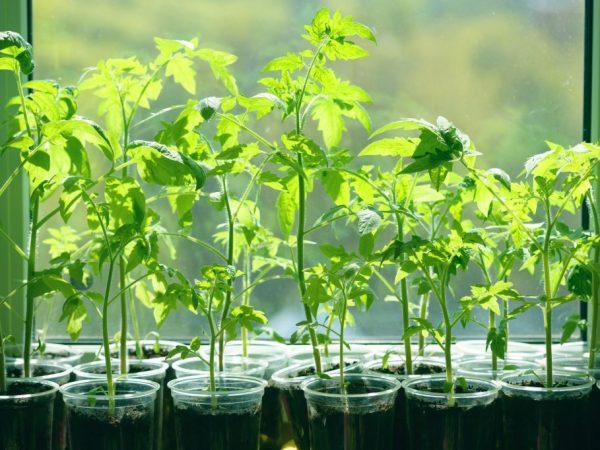 Рассаду можно высаживать через два месяца после посадки