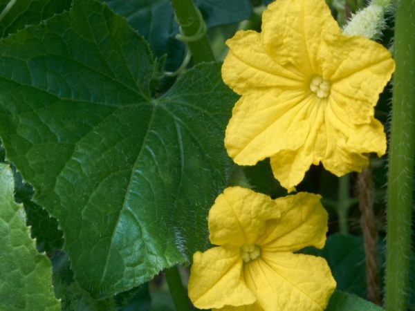 Растениям необходим солнечный свет