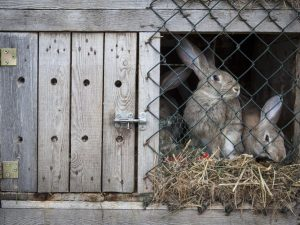 Почему кролики грызут клетки