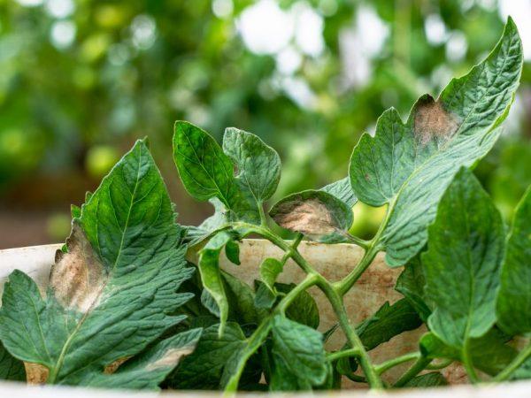 Тесная посадка губительно действует на растения