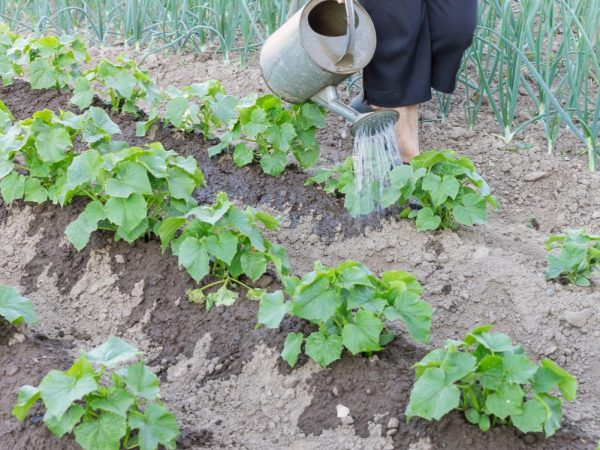 Удобрять растения нужно свежим раствором