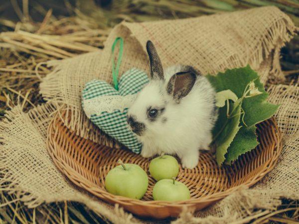 Рацион декоративного кролика в домашних условиях