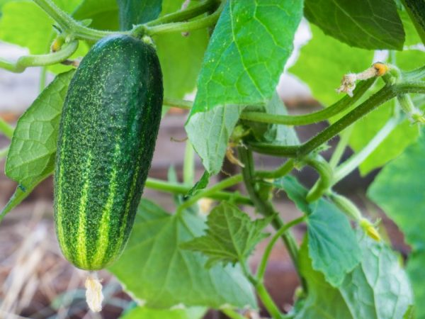 Регулярно осматривайте растения на наличие вредителей
