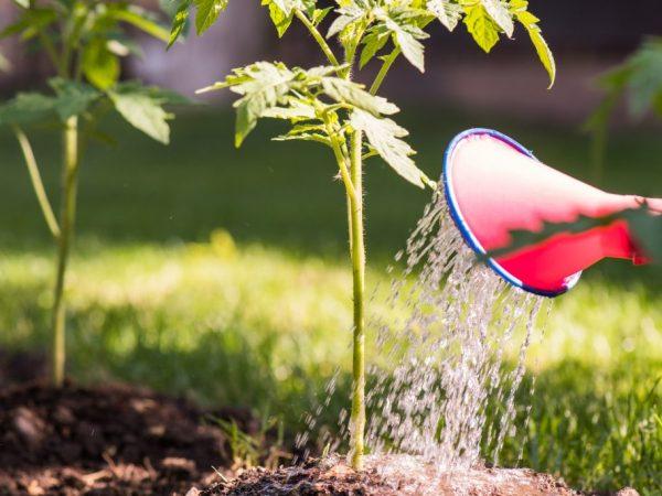 Перекись водорода для подкормки рассады томатов
