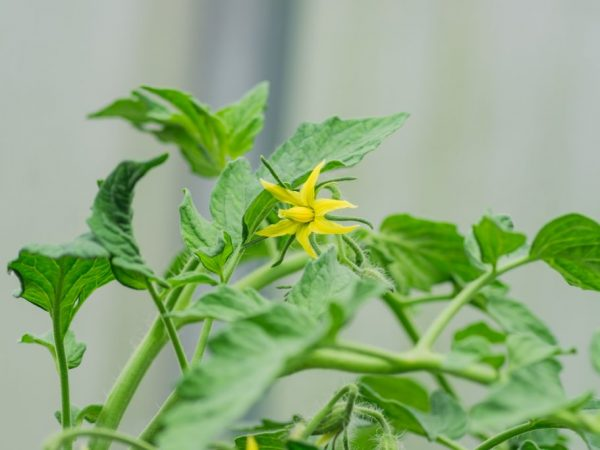Правильный уход поможет сохранить здоровье растений