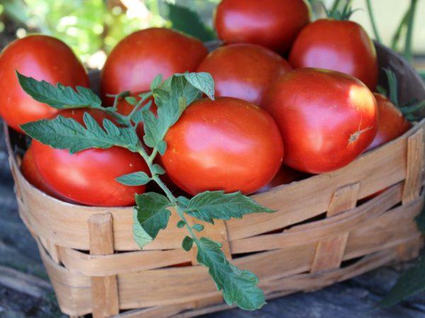 Выращивание томата Де Барао гигант