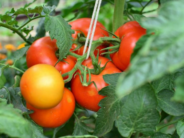Оберегайте растения от избытка влаги