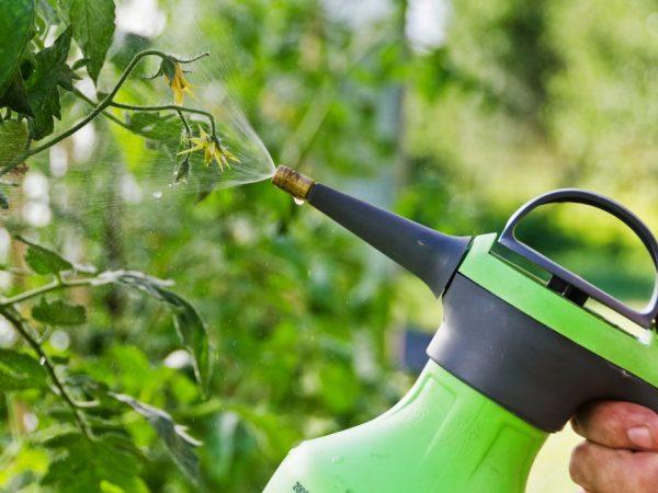 Обработка защищает растения от болезней