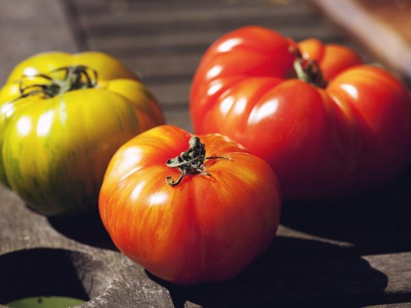 Урожайность томатов зависит от качества ухода