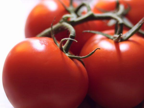 Отличный урожай можно получить при выращивании в южных регионах