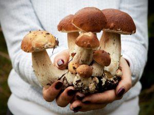 Способы домашнего выращивание белых грибов