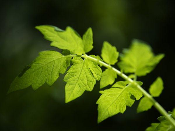 Обрезка позволяет растениям свободно развиваться