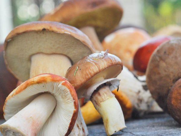 Роль грибов в природе