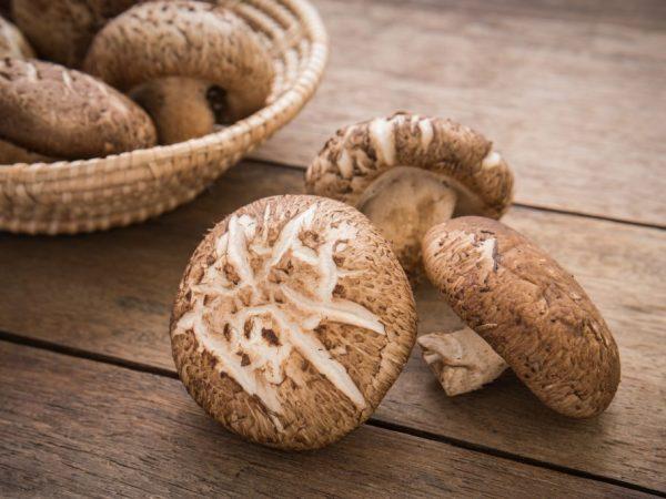 В лесах Приморья можно найти немало редких видов грибов
