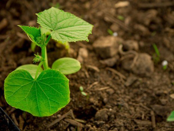 Растения нужно поливать каждый день
