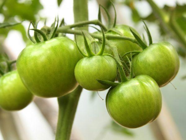 Ровные плоды среднего размера
