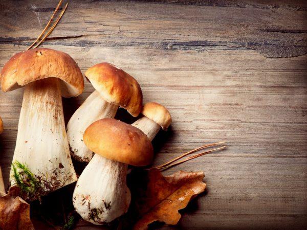 Характеристика грибных спор
