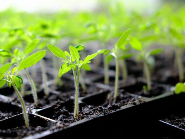 Пересаживать растения можно только в теплую землю