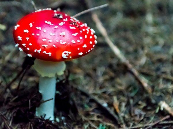 Ядовитые грибы наносят большой вред организму человека