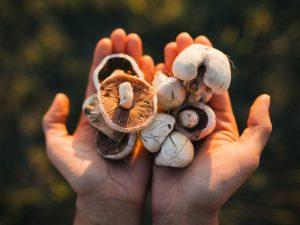 Какую роль играют грибы в жизни человека