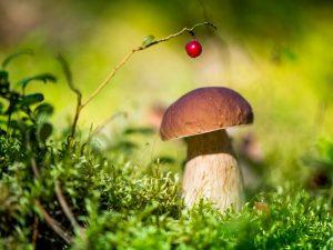 Сбор грибов в Беларуси в 2019 году