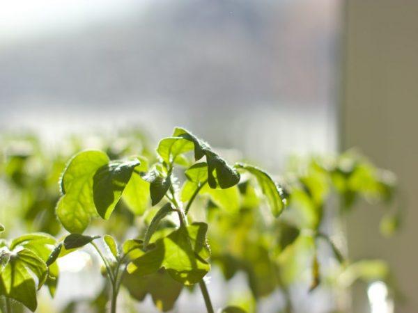 Ухаживать за растениями нужно правильно