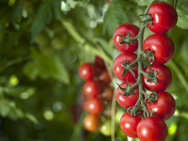 Удобрение повышает урожайность растений