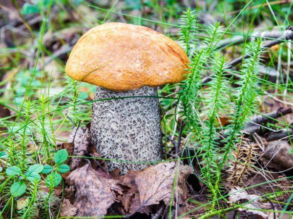 В Новосибирске много грибных мест
