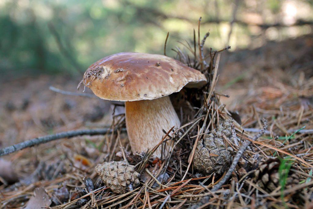 Фото грибов растущих в нижегородской обл стихи проводят