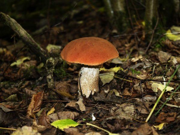 Свердловская область богата грибами
