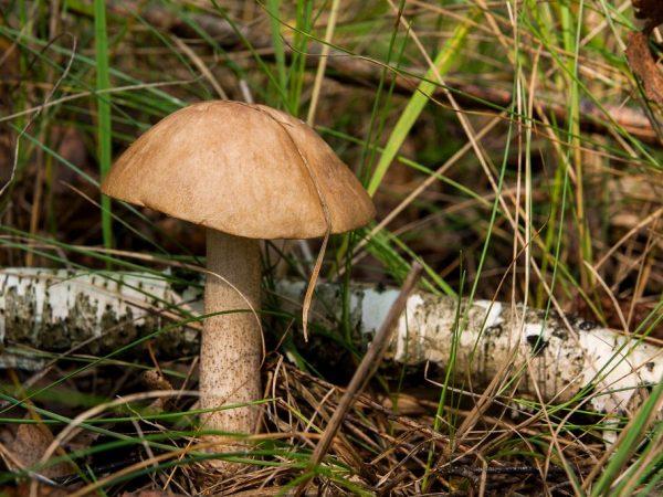 Сбор грибов в Тульской области в 2019 году