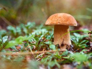 Сбор грибов в Удмуртии в 2019 году