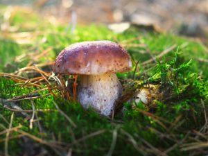 Сбор грибов в Костромской области