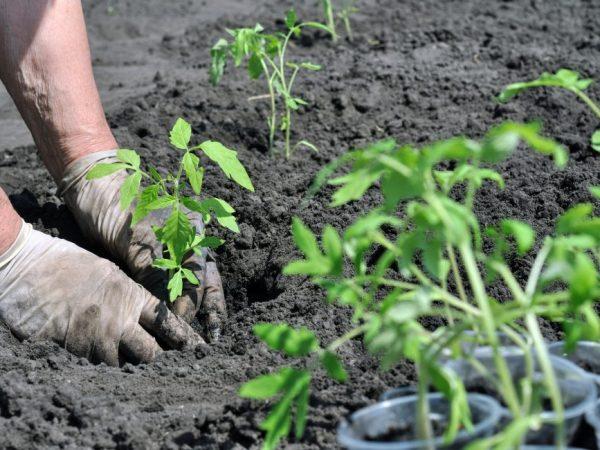 Растения нужно периодически удобрять