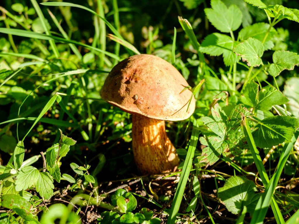 доставка грибы забайкальского края фото описание и название грибов клеточку, как его