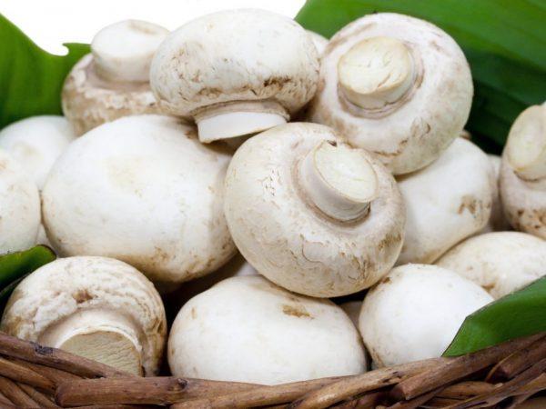 Самые популярные в мире грибы - шампиньоны