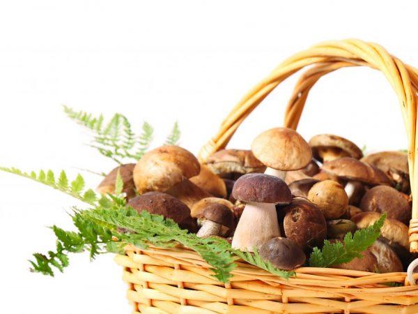 Цельные грибочки очень вкусные