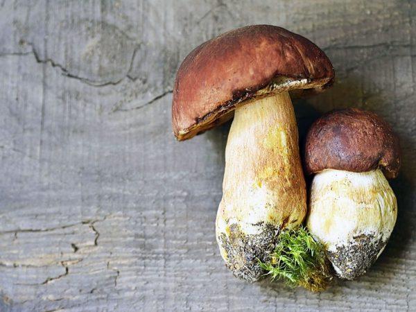 В грибах очень много витаминов