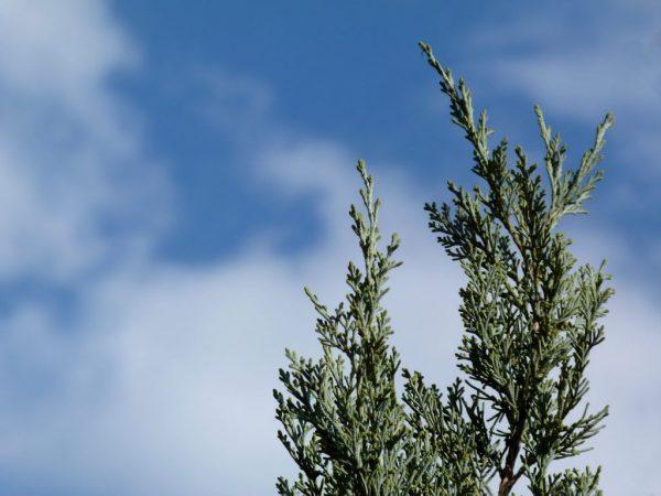 Удобрения повышают иммунитет растения