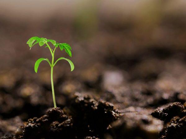 Правильность ухода влияет на качество урожая