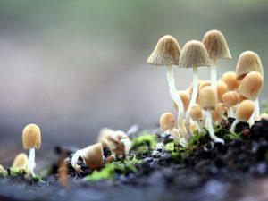 Поганка — самый ядовитый гриб
