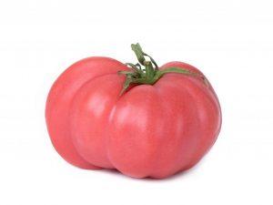 Выращивание томата Вождь краснокожих