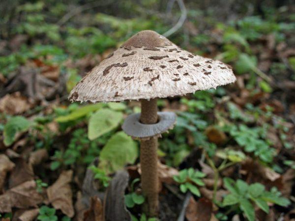Из грибов можно приготовить много блюд