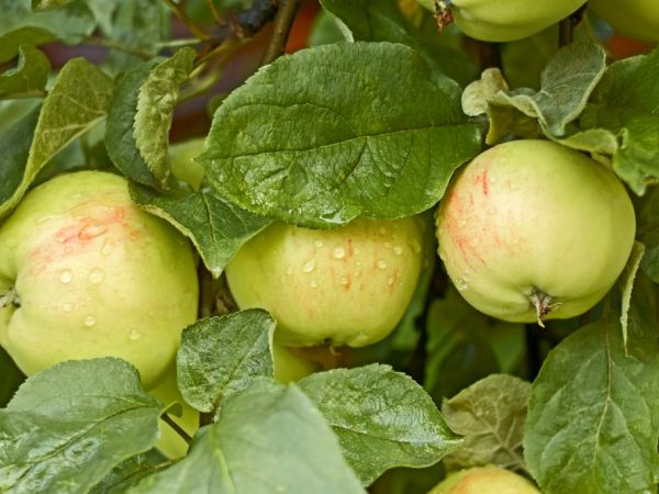 Опылители повысят урожайность