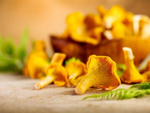 Лисички — виды грибов и их применение