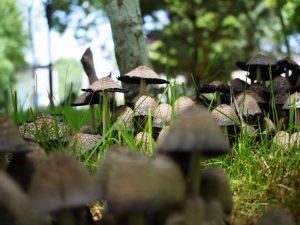 Как избавиться от грибов на газоне — проверенные методы