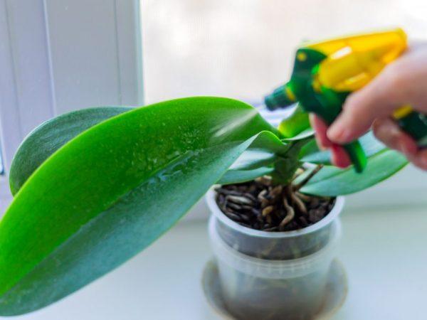 Применение Актары для орхидей — правила и рекомендации
