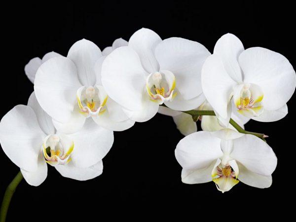 Удобрения улучшают цветение